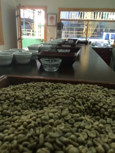 Costa Rican Green coffee beans on display at a cupping station